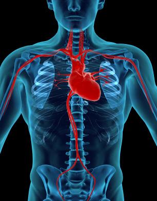 Representación de huesos y sistema circulatorio en un cuerpo sano