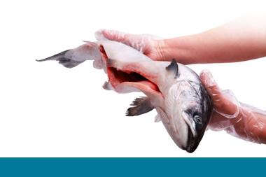 Manos con guantes profilácticos enseñan un pescado abierto