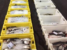 Cajas de distribución de pescado congelado
