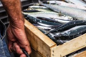 pescado fresco y de calidad
