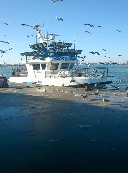 gaviotas sobrevolando un barco de pesca atracado