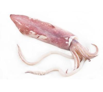 Pieza de calamar fresco