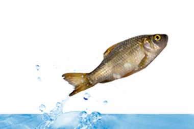 Pescado saltando en el agua