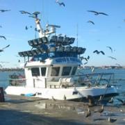 Barco atracado en el puerto, del tamaño adecuado para la pesca responsable